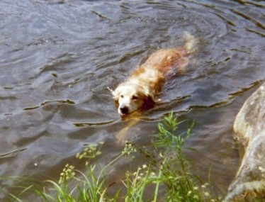Jesse swimming (2)