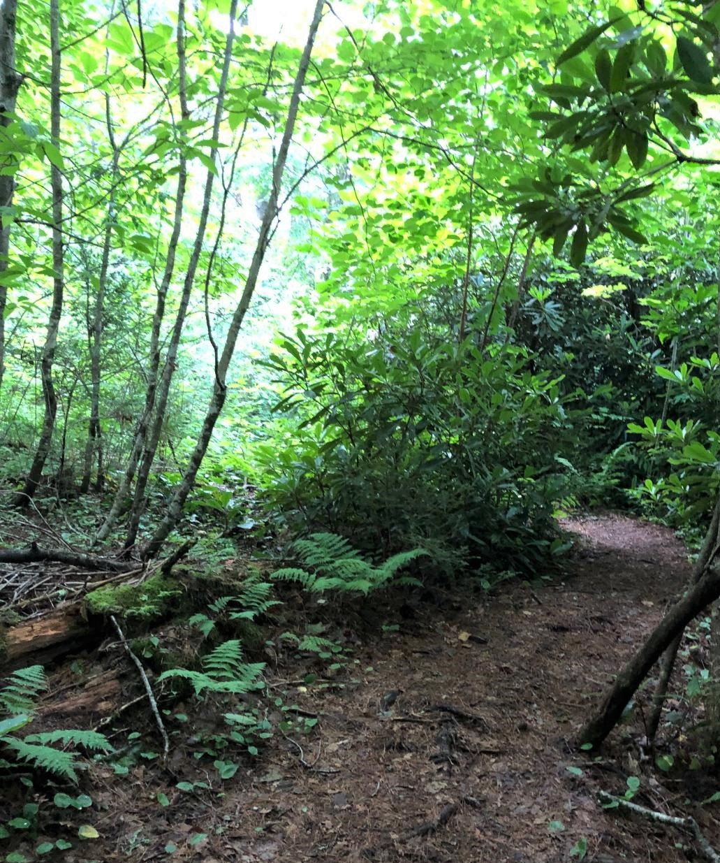 LLH trail