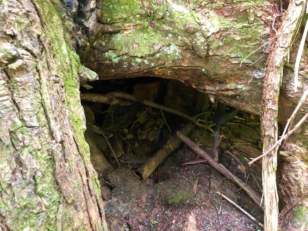 Mountain Magnolia den