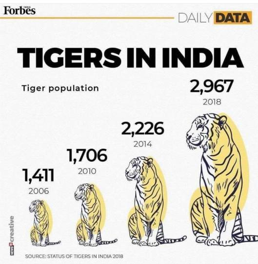 good news tigers in india