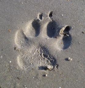 paw-print-from-pixabay.jpg