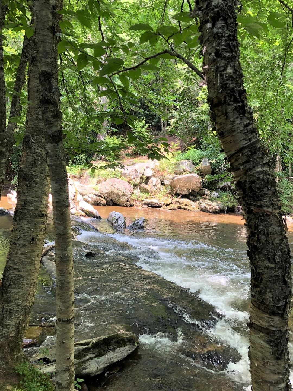 river through trees.jpg