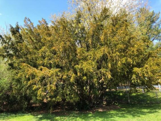 tree at Boone park.jpg