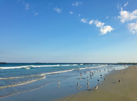 birds on beach w blue