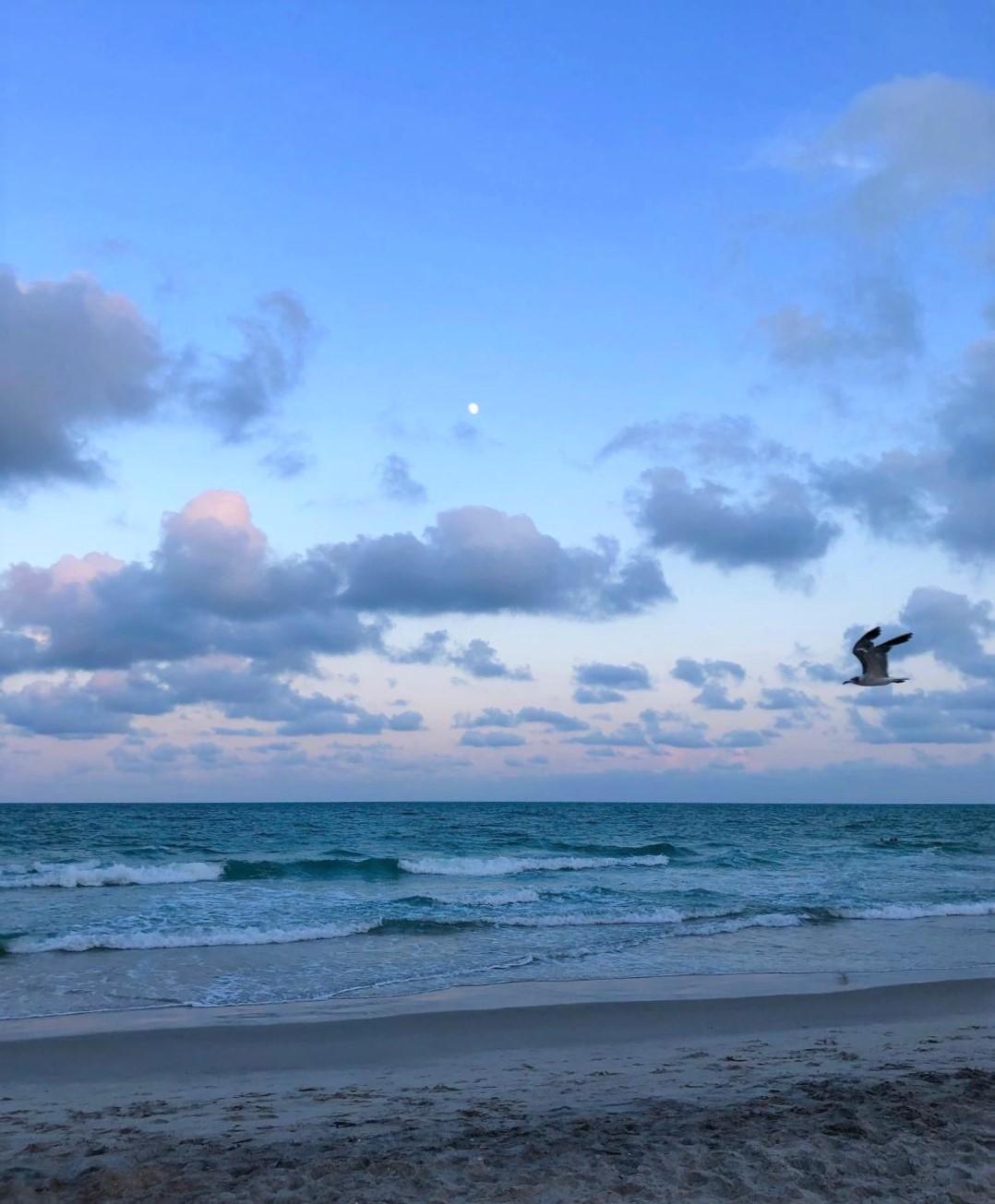 blue twilight cover photo (2)