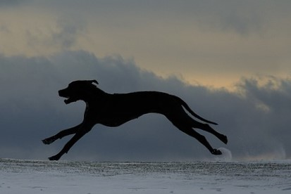 dogs running Pixabay (2)