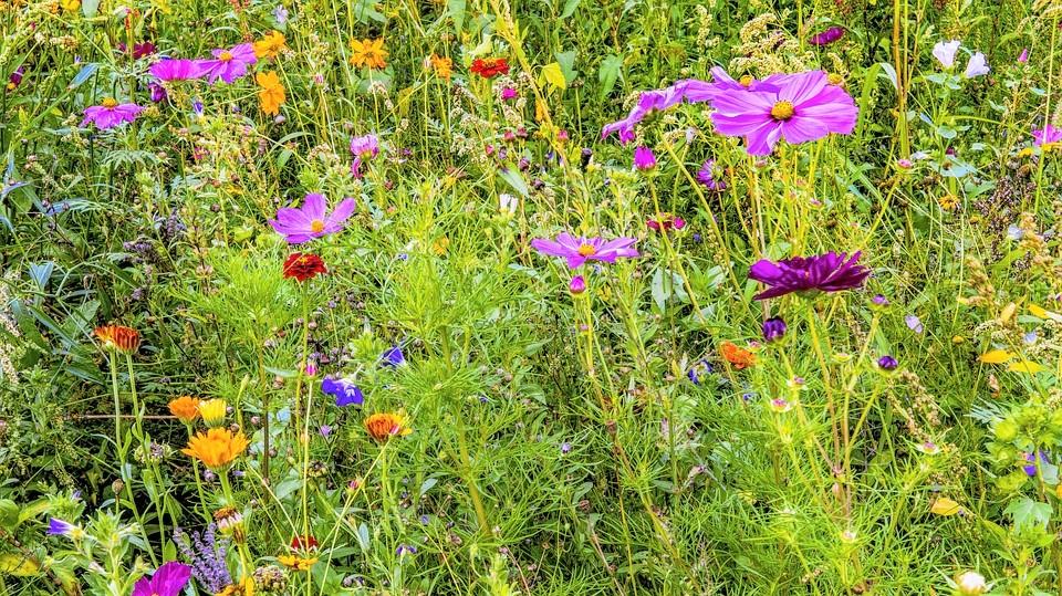 flower-meadow pixabay wild flowers (2)