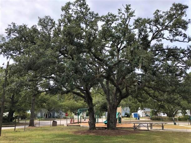 Trees at K Park