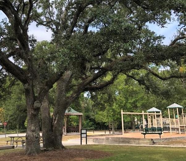 Trees at k park (2)