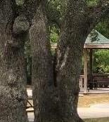 Trees at k park (4)