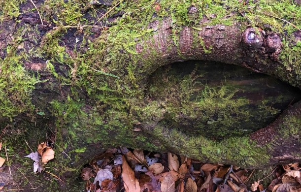 tree wound with moss (2)