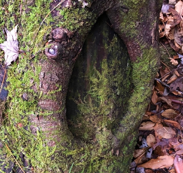 tree wound with moss