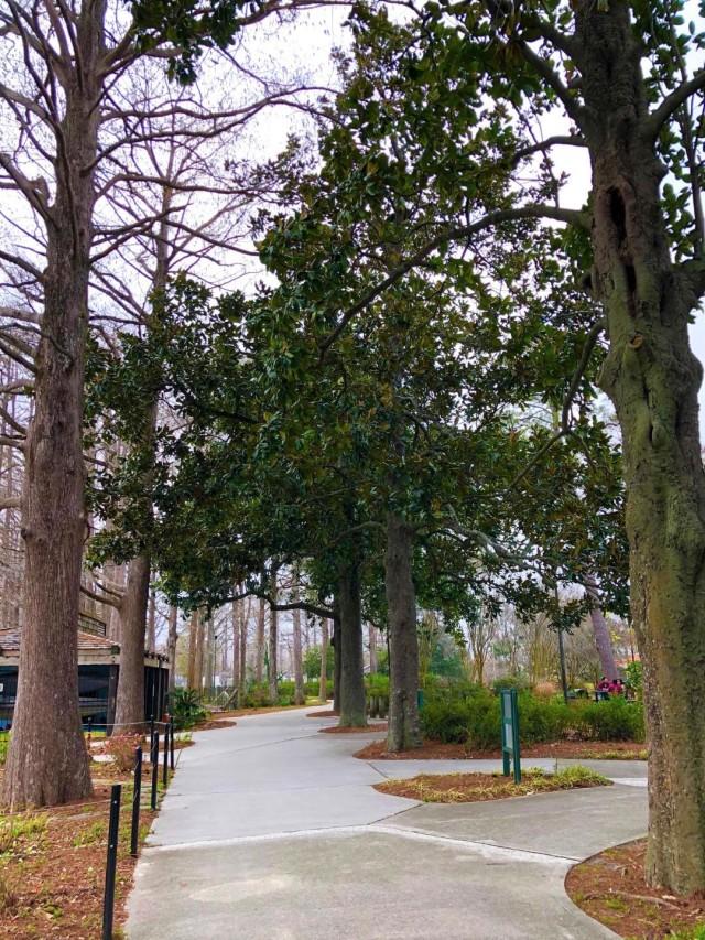 Tree love magnolias in winter path