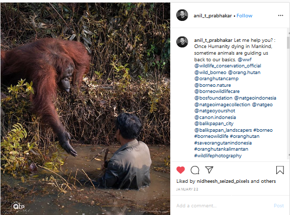 """Screenshot_2020-02-11 Reminiscence Photography on Instagram """"Let me help you Once Humanity dying in Mankind, sometime anima[...]"""