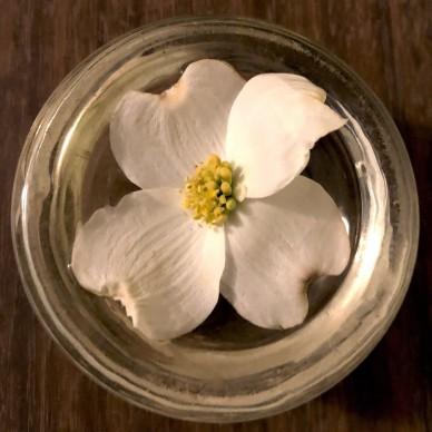 dogwood blossom gift (2)