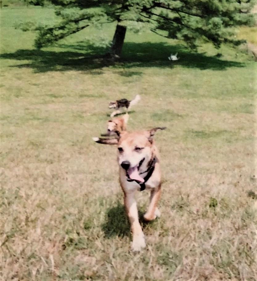 Mary Moo at the Boone Dog park (2)